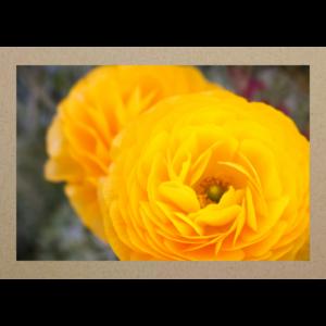 Gelbe Blumen Menton