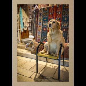 Hund auf Stuhl am Teppichmarkt