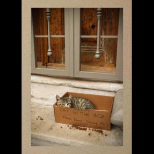 Katze in Kartonbox