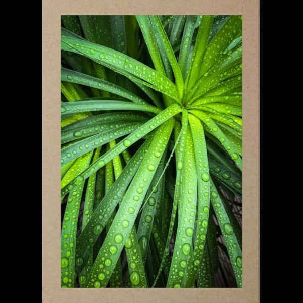 Regentropfen auf Blätter