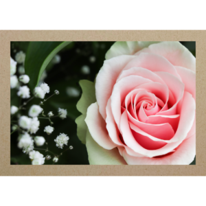 Rose mit Schleierkraut
