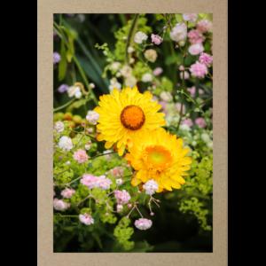 Strohblumen gelb