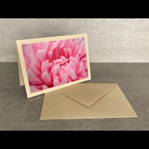 Vorderseite-Chrysantheme pink