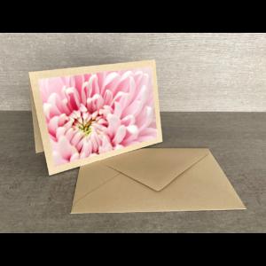 Vorderseite-Chrysantheme rosa