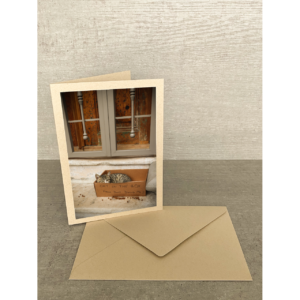 Vorderseite-Katze in Kartonbox